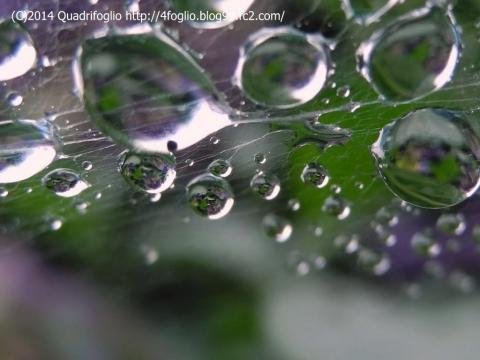 蜘蛛の巣と水滴と映り込みと