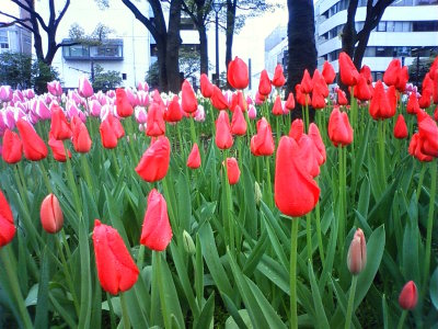 photo_hana_tyuripu_9_2010_0417.jpg