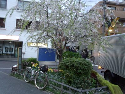 photo_randner_1_sakura_2014_0410.jpg
