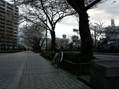 photo_randner_3_sakura_2014_0410.jpg