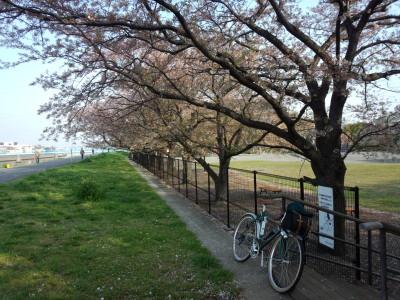 photo_randner_egawa_3_sakura_2014_0410.jpg