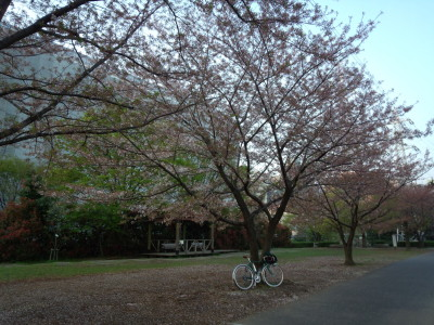 photo_randner_egawa_5_sakura_2014_0410.jpg