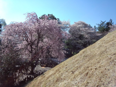 photo_randner_minumahosikawa_10_sakura_1_2014_0405.jpg