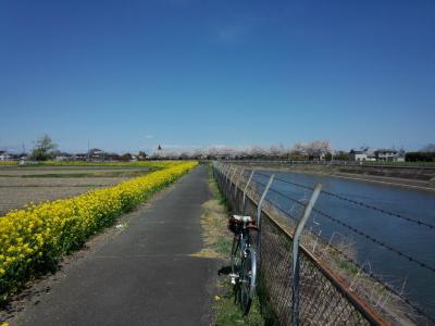photo_randner_minumahosikawa_23_nabana_1_2014_0405.jpg