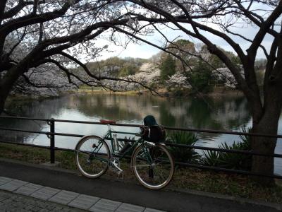 photo_randner_mituikesakura_1_2014_0401.jpg