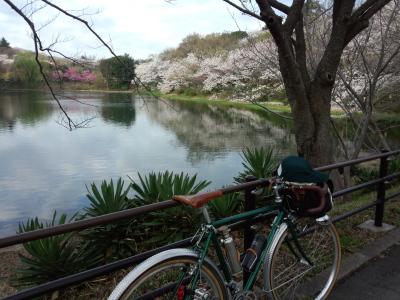 photo_randner_mituikesakura_2_2014_0401.jpg
