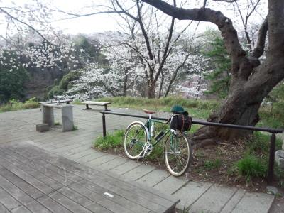 photo_randner_mituikesakura_7_2014_0401.jpg