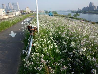 photo_randner_tamagawa_1_2014_0426.jpg