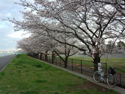 photo_randner_turimigawa_sakura_1_2014_0401.jpg