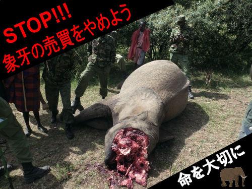 世界中へ愚かさを発信中「楽天は世界最大の象牙・鯨肉市場 ...