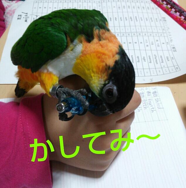 fc2_2014-02-19_22-18-02-977.jpg