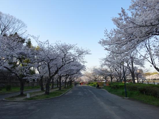 2014年桜5