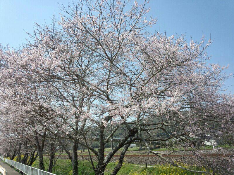 fc2_2014-04-02_22-17-16-675.jpg