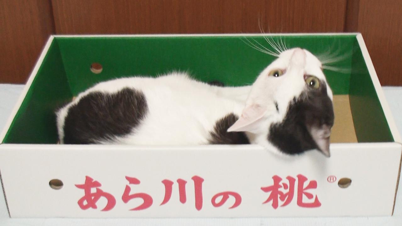 cat20140724_peach.png