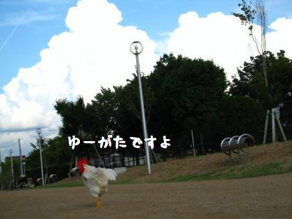 ni-575.jpg
