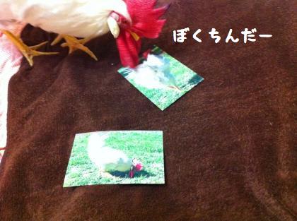 ni-96_20140523205732b8f.jpg