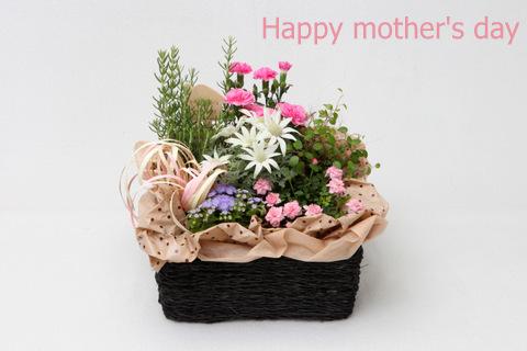 かわいい花 母の日