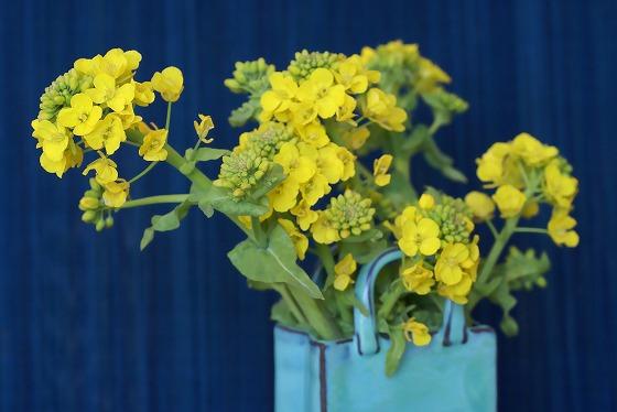 140303菜の花-1
