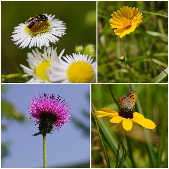 140728あららぎ湖畔の花