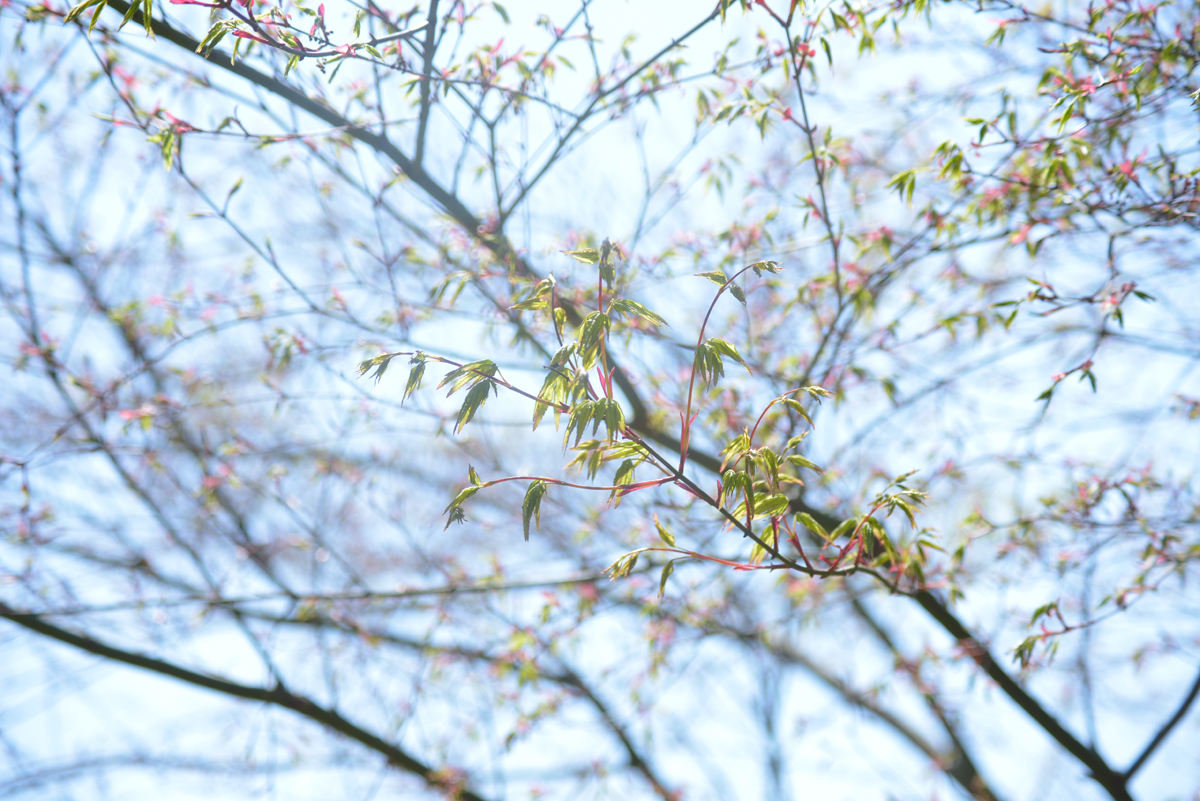 Garden-2_20140407.jpg