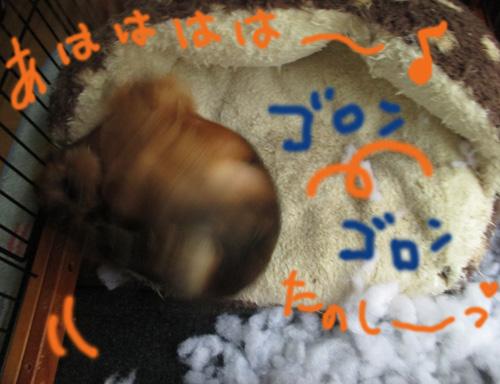 burogu37_20140530171927cf6.jpg
