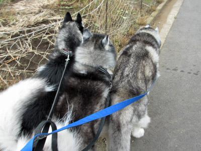 強風の中のお散歩