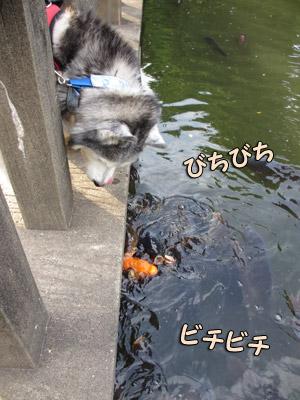 鯉さんズと感動のご対面