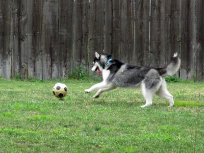ボール遊びスフレ