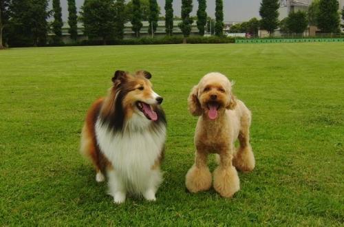 笑顔のこの2匹