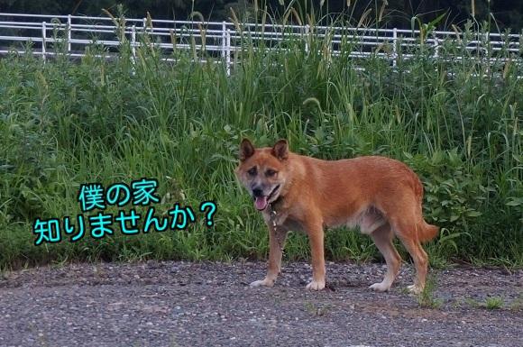 20140826001536f19.jpg