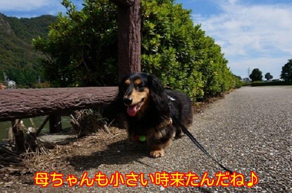 20140923231648ed5.jpg