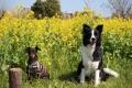 コタ&大和ママ