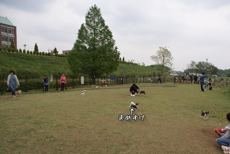DSC077200508.jpg