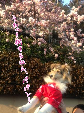 fc2blog_20140319234818a00.jpg