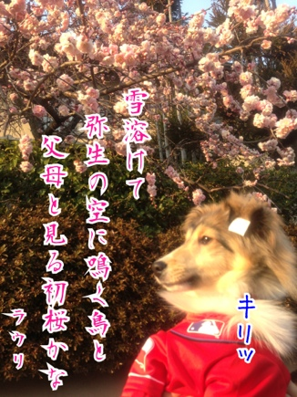 fc2blog_20140319235046b24.jpg