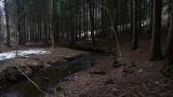 20140301原生の森14