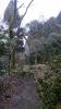 20140301原生の森11