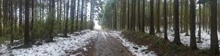 20140301原生の森19