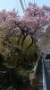 20140201石垣山188