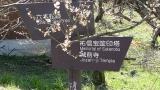20140308寒川神社140