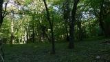 20140517原生の森10
