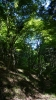 20140517原生の森11