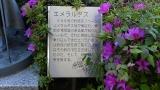 20140502小浜敦賀240