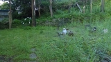 20140712原生の森032