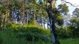 20140712原生の森034