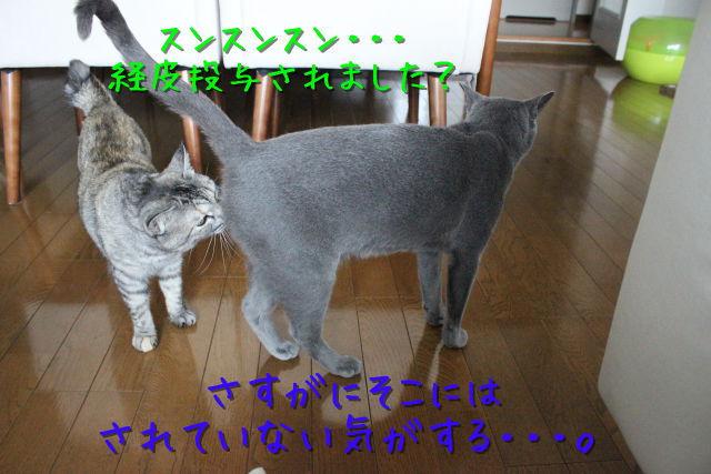 kako-XIiF7kuisu1h2nWP.jpg