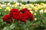 flowerpark-03.jpg