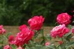 flowerpark-04.jpg