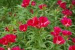 flowerpark-09.jpg