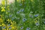 flowerpark-11.jpg